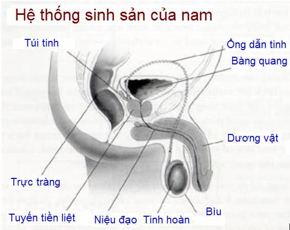 he-thong-nam-gioi