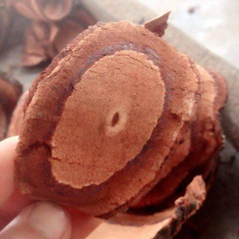 Dây máu gà hay kê huyết đằng, mát mạng, thàn mát mạng (danh pháp: Callerya reticulata) là một loài thực vật có hoa trong họ Đậu. Loài này được (Benth.) Schot miêu tả khoa học đầu tiên.