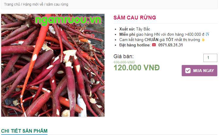 rễ cây Bồng Bồng