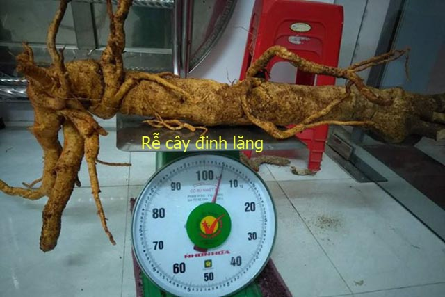 Cây Đinh Lăng, Tên khoa học, Thành phần hóa học, tác dụng chữa bệnh của toàn cây Đinh Lăng