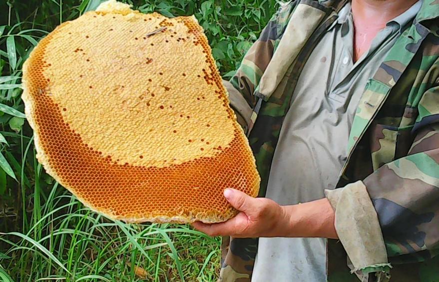 Kinh nghiệm dùng nghệ, trứng gà, mật ong chữa bệnh