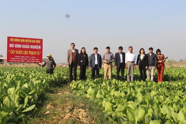 Trồng Cây dược liệu giúp giảm nghèo cho người nông dân ở Ninh Bình