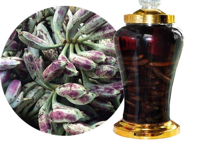 Cách ngâm rượu quả chuối hột rừng, Musa acuminata Colla
