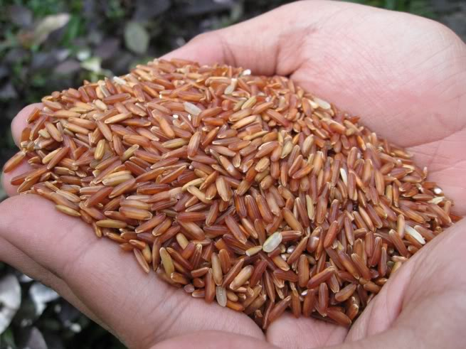 Siro gạo lứt có thể liên quan đến căn bệnh cứ 6 giây có một người tử vong
