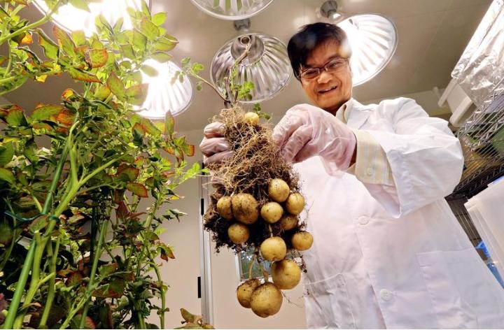 Nhật Bản cho phép lưu thông thực phẩm biến đổi gen ra thị trường