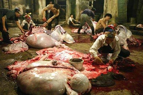 Người có Chí là người không sát sinh, không sử dụng các sản phẩm từ động vật hoang dã