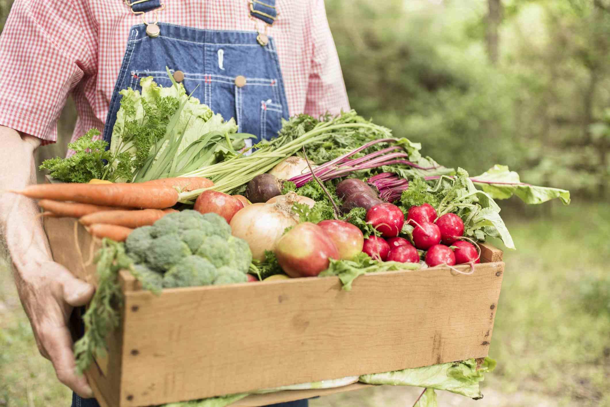 8 loại thực vật có tác dụng như thuốc kháng sinh