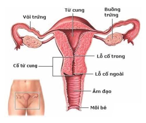 Ung thư cổ tử cung gây tử vong vì ít có triệu chứng
